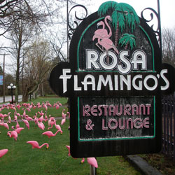 Rosa Flamingo's
